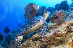 14895_Scuba_Diving_Akumal_Mexico_1